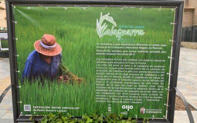 Los arrozales de Calasparra visitan el Paseo Alfonso X el Sabio